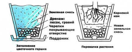 Пересадка комнатных цветов, состав почвы