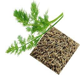 Маски из семян и свежей зелени укропа