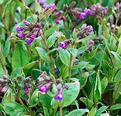 лечебные растения описание и фото