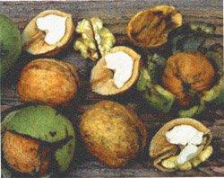 Лекарство из грецкого ореха