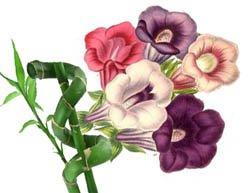 Растения придающие силы, повышают настроение