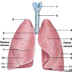 Пневмония очаговая, симптомы, лечение