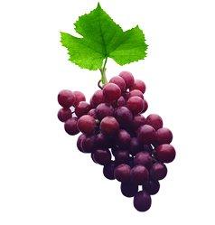 Виноград культурный - Лекарственные растения