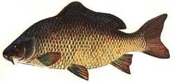 Рыба от морщин и шелушения