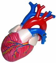 Сердечная недостаточность, причины, симптомы, лечение