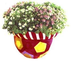 Экзакум родственный - Комнатные цветы