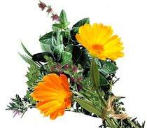 Нарушение менструального цикла - помогут травы