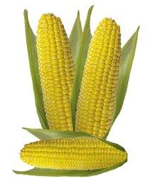 Кукуруза обыкновенная - Лекарственные растения