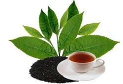 О пользе чайного листка