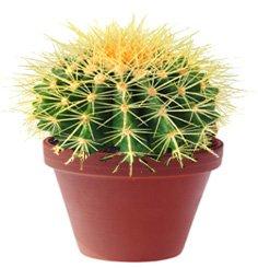 Растения защищают и нападают