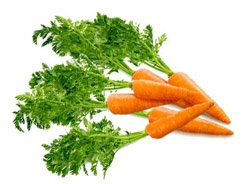 Морковь  посевная - Лекарственные растения