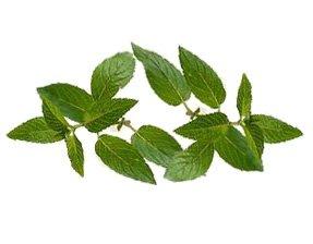 Мята перечная - Лекарственные растение