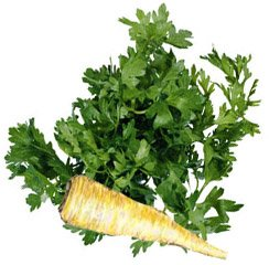 Петрушка огородная - Лекарственные растения