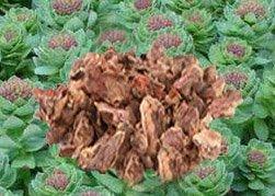 Родиола розовая - Лекарственные растения