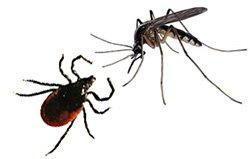 Энцефалит весенне-летний и летне-осенний - болезни человека