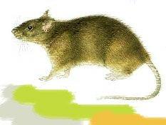 гороскоп 2013 год крысы: