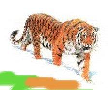 Гороскоп на 2013 год Тигр