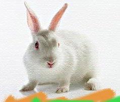 Гороскоп на 2013 год Кролик