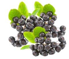 Рябина черноплодная - Лекарственные растения