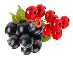 Смородина черная - Лекарственные растения