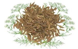 Тмин обыкновенный - Лекарственные растения