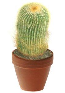 Нотокактус ленингхауза - Комнатные растение