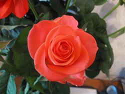 Как дольше сохранить подаренные цветы