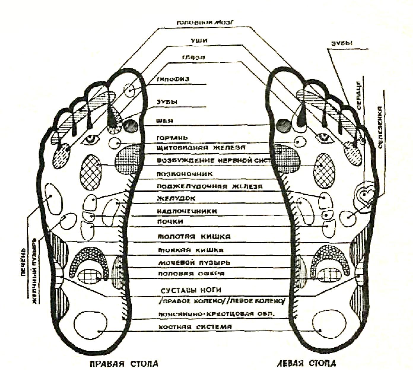 Рефлексотерапия - Точечный массаж стопы