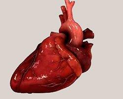 Легочное сердце острое и хроническое - Болезни человека