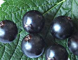 Маски из настоя свежих ягод и листьев смягчают кожу лица