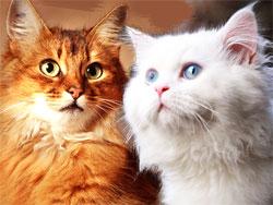 Талисманы-кошки приносят удачу