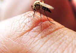 Малярия - Болезни человека