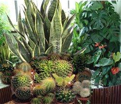Полезные комнатные растения
