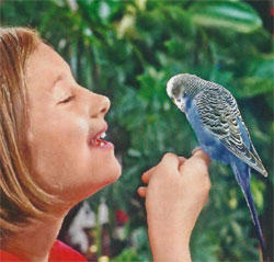 Попугаи в домашних условиях